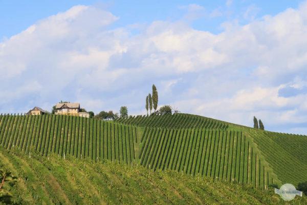 Weinberge Südsteiermark
