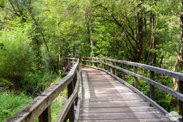 Ein Weg durch den Wald
