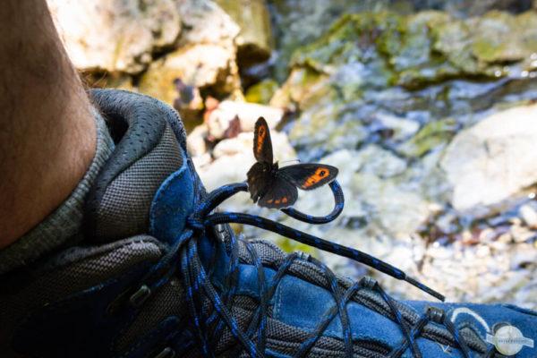 Schmetterling auf Wanderschuh