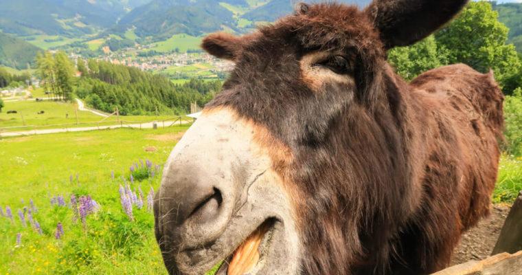 Tiere in der Steiermark – tierische Erlebnisse
