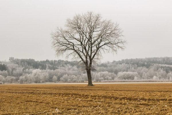 Frost im Winter