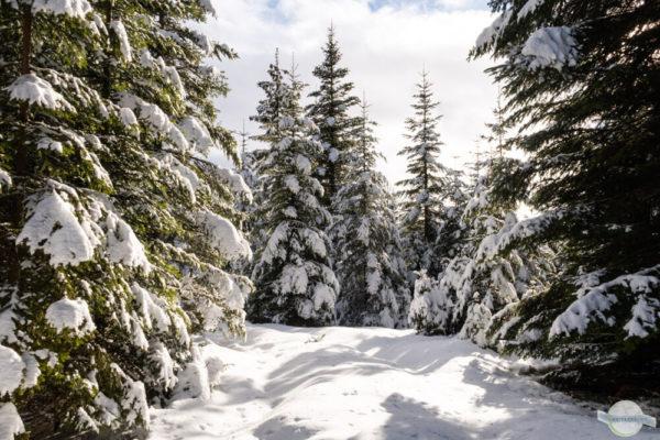 Reinischkogel Winter