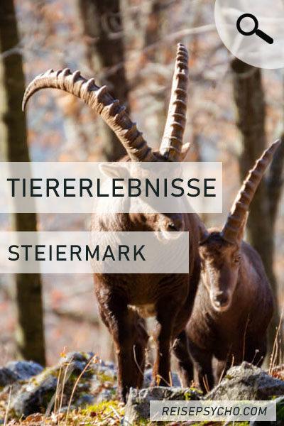 """Pin """"Tiere in der Steiermark"""""""