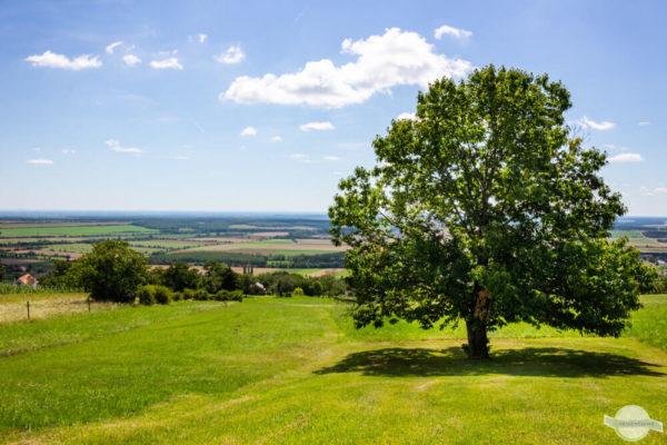 Alter Kastanienbaum im Sommer