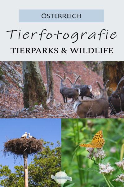 Pin Tierfotos aus Österreich