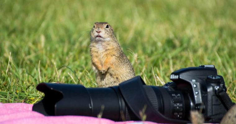 Tierfotos aus Österreich – von Alpaka bis Ziesel