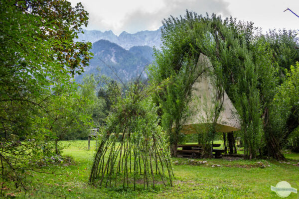 Weidendom im Nationalpark Gesäuse