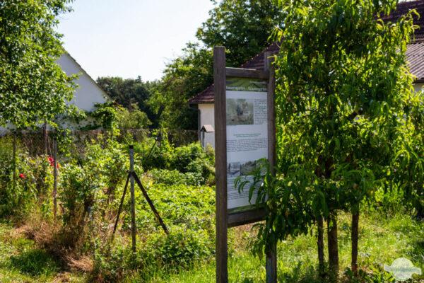 KinderKräuterWeg Burgauberg Bauerngarten