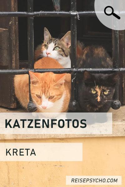 Kreta Katzenfotos Pin