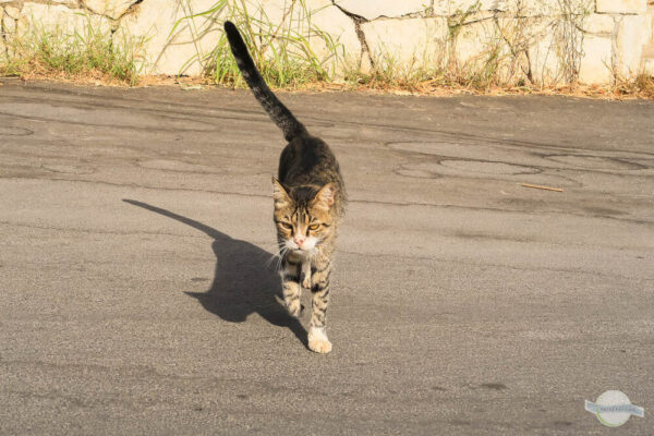 Dünne Katze auf der Straße