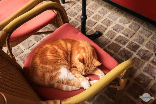 Katze schläft am Sessel