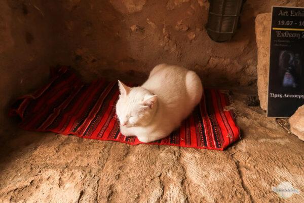 Katze auf Teppich schlafend