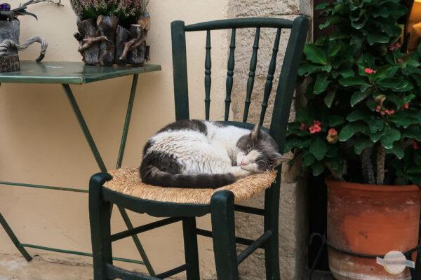 Katzen auf Kreta - Katze schläft am Stuhl