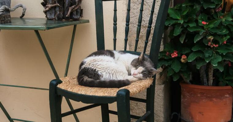 Katzen auf Kreta | Fotos zum Schnurren