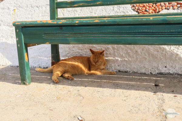 Katze schläft im Schatten