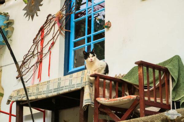 Katze auf Kreta wartet auf Gäste