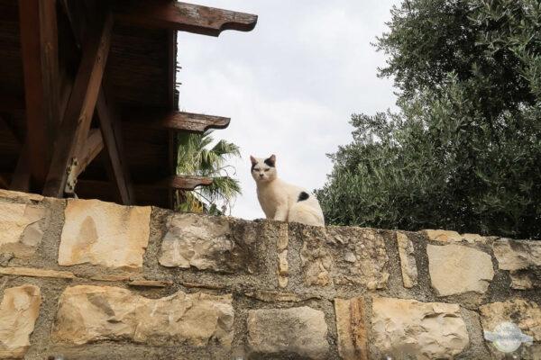 Katze auf Mauer