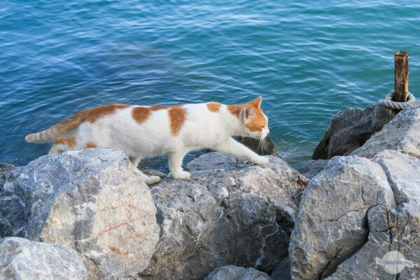 Katze am Wasser