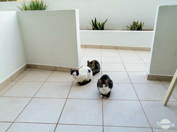 Katzen warten vor Hotel