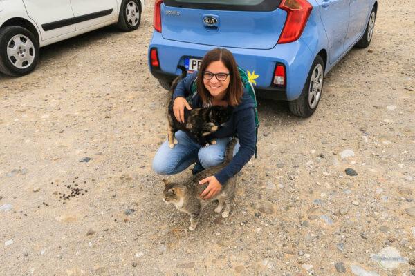 Von Katzen auf Kreta belagert