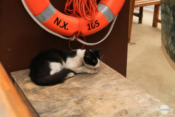 Den Katzen auf Kreta helfen