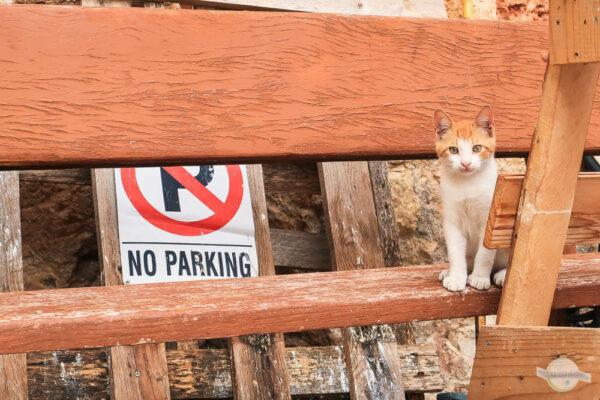 Kleine Katze auf Parkbank