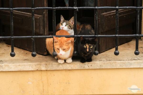 Katzen hinter Gitter