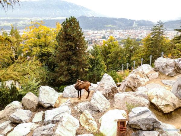 Herbst in Innsbruck